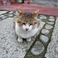 江ノ島の猫①