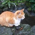 江ノ島の猫②