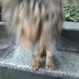 江ノ島の猫③