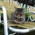 江ノ島の猫⑤