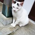江ノ島の猫⑥