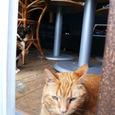 江ノ島の猫⑦